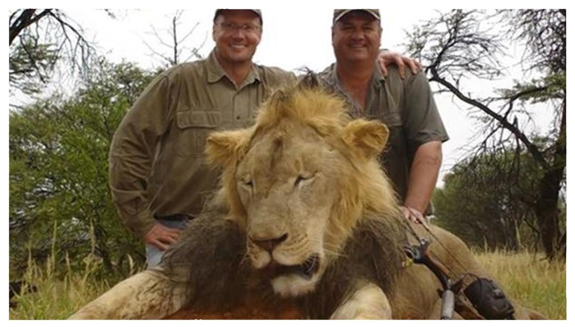 Zabijanie lwów wcale nie jest złe!
